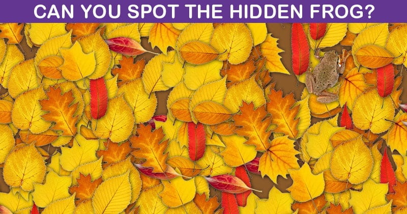 No One Can Beat This Hidden Frog Visual Test. Are You Up To The Task?