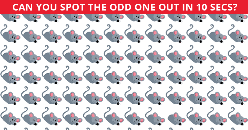 Only A Few Can Nail This Odd One Out Test! Find Out If Your IQ Is High Enough To Pass This Challenge